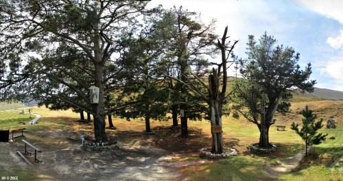 pinos de garabandal fondo