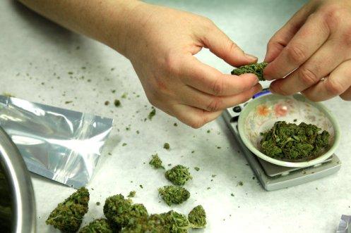 pesando y envasando marihuana