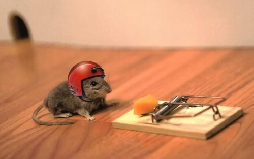 trampa y raton