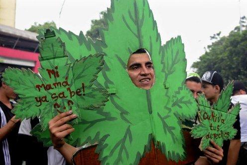 legalizacion de la marihuana en uruguay