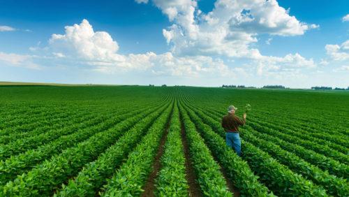 campo plantado con soja
