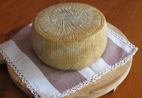 queso caciotta stagionata