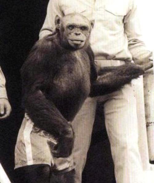 oliver simio humanizado