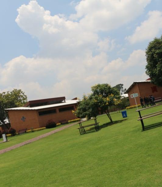 Zonas verdes del colegio