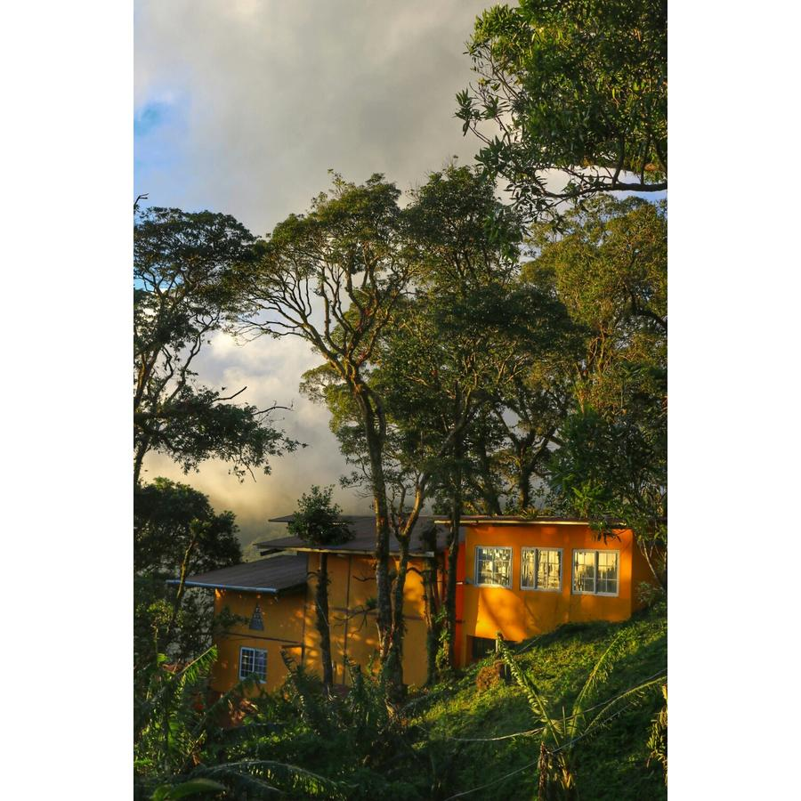 A yellow building is nestled among some trees in the cloudforests of Panama, the sun is shining on the building