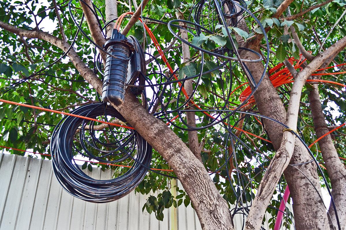 jugaad-tree-3