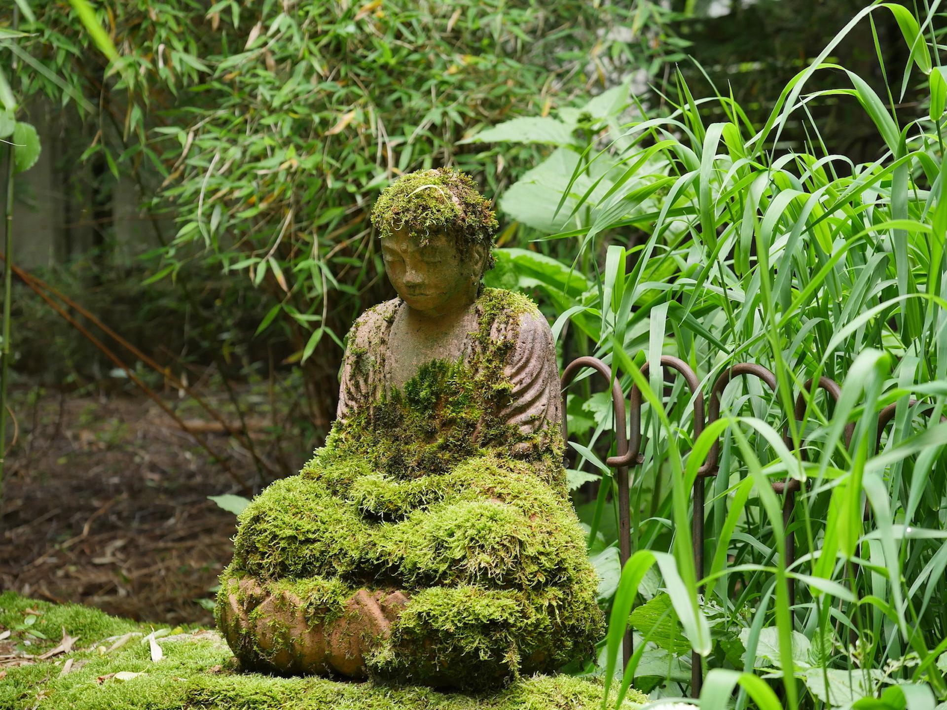 zen zazen meditation johanneshof hotzenhaus dharma sangha baker roshi buddhismus Buddha Statue
