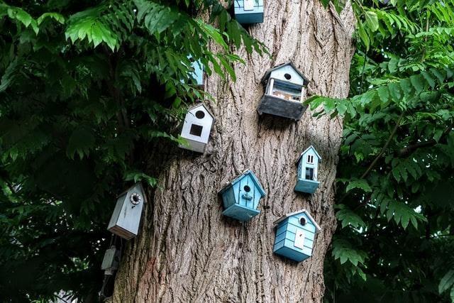 Bird houses in Amsterdam