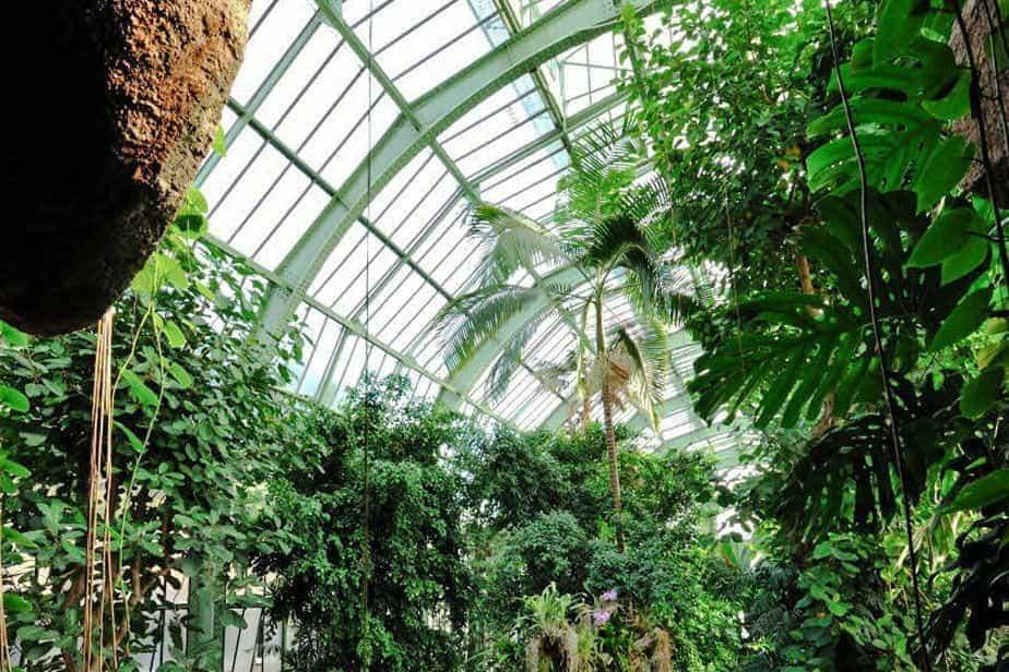 Grandes Serres du Jardin des Plantes Paris botanical species