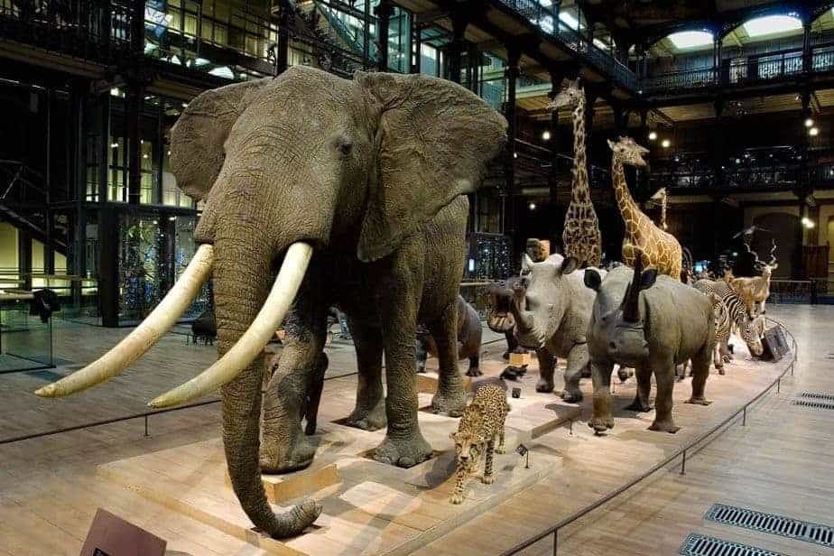 lifelike speciemens at Grande Galerie de l'Evolution
