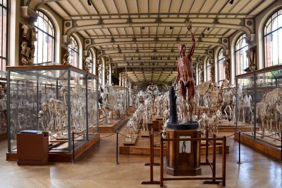 Galerie de Paléontologie et D'Anatomie Comparée speciemens of various animals