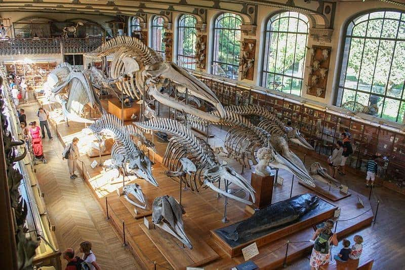 Giant fossils in the paris museum of natural history