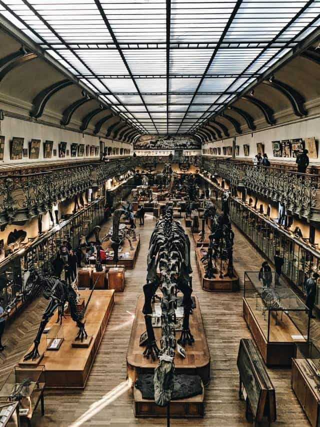 paris museum of natural museums fossil records
