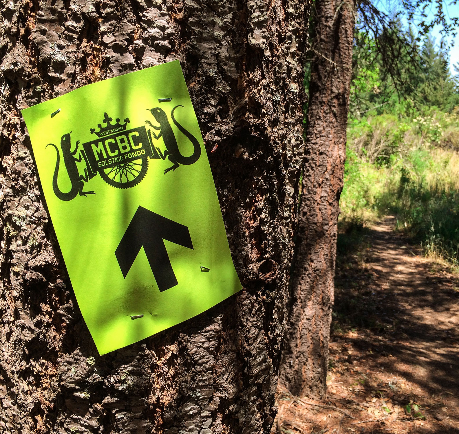 Trail directional with Dirt Fondo logo stapled to tree