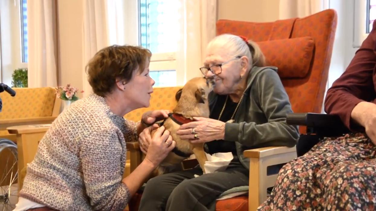 Hund koser med eldre dame