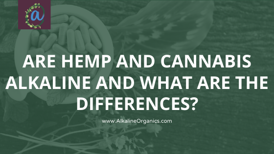 Are Hemp & Cannabis Alkaline? And What Are The Differences?