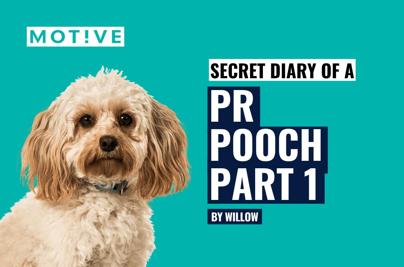 Secret Diary of a PR Pooch