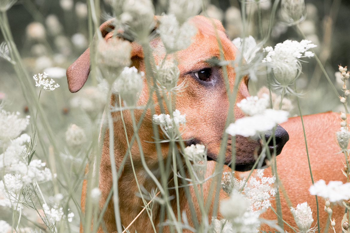 Seasonal Allergies Can Affect Our Animal Companions, Too