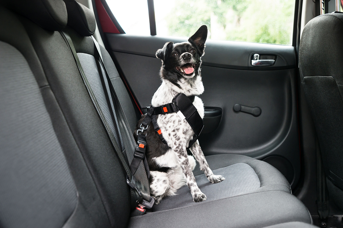 Hitting the Road With Your Pets