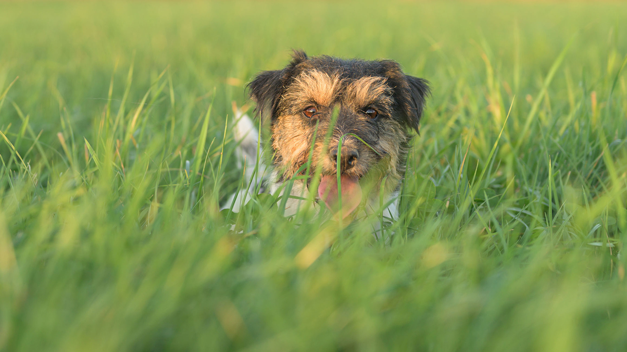 Lyme Disease and Your Dog: What to Know