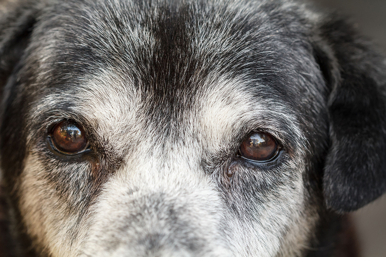 Arthritis and Dogs