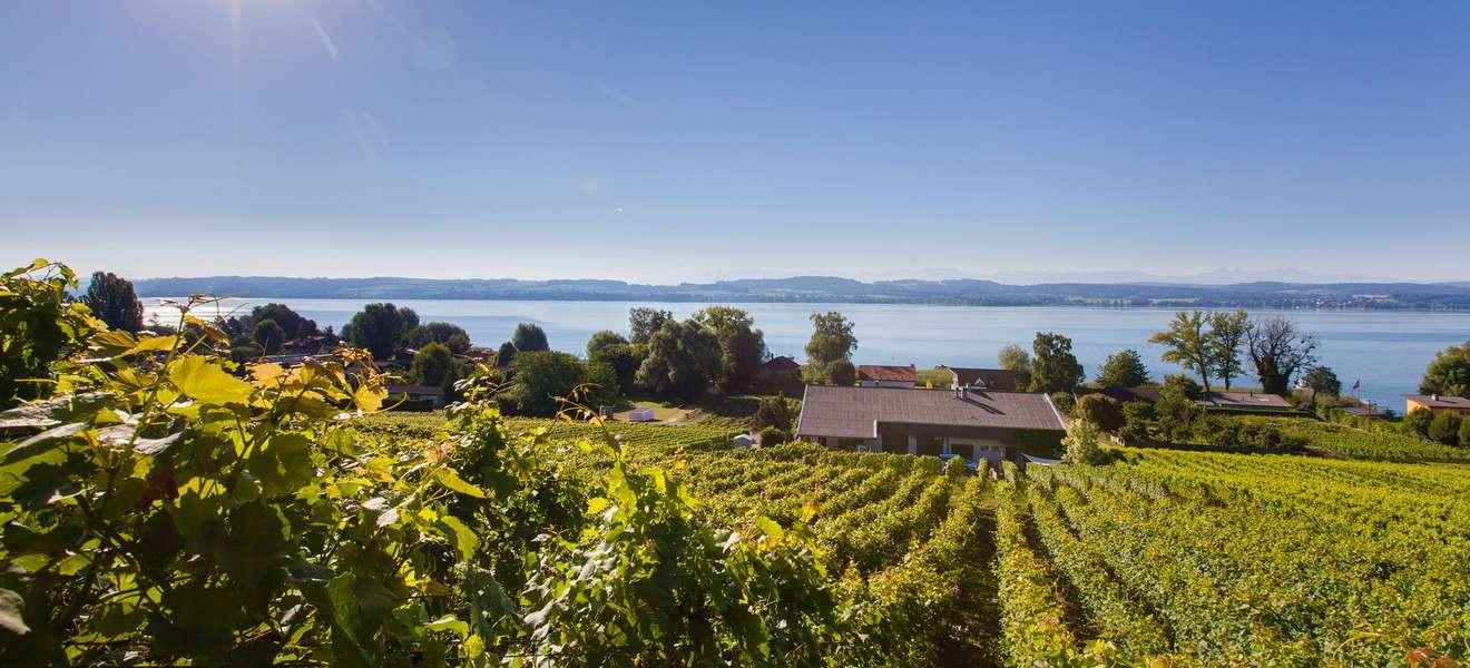 Die Weinregion am Mont Vully 🍇