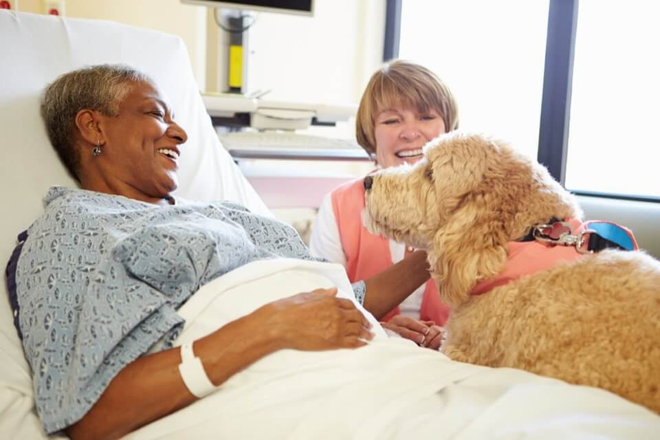 How Pet Therapy Helps Patients