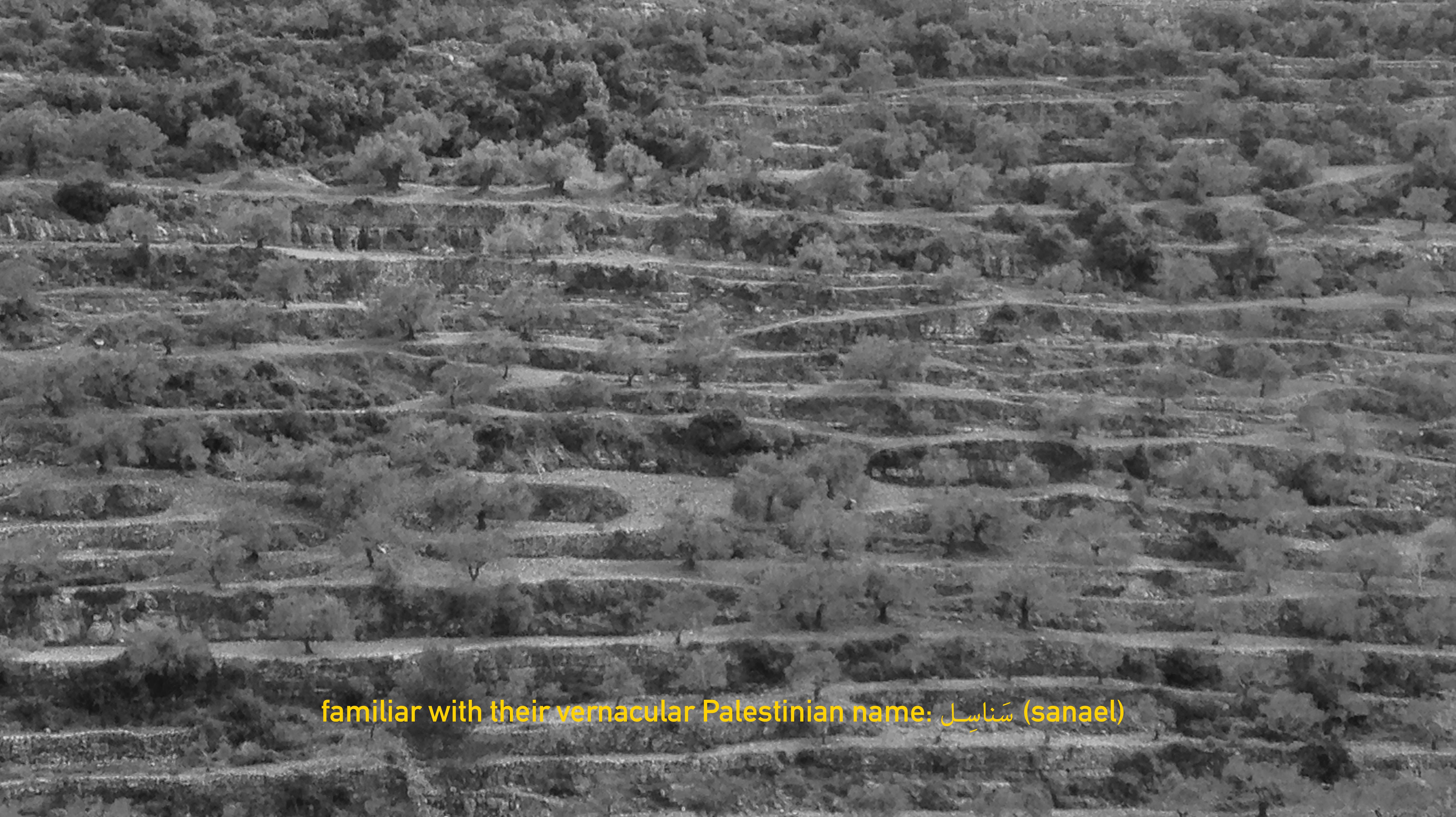 Video Still: Wild Plants of Palestine