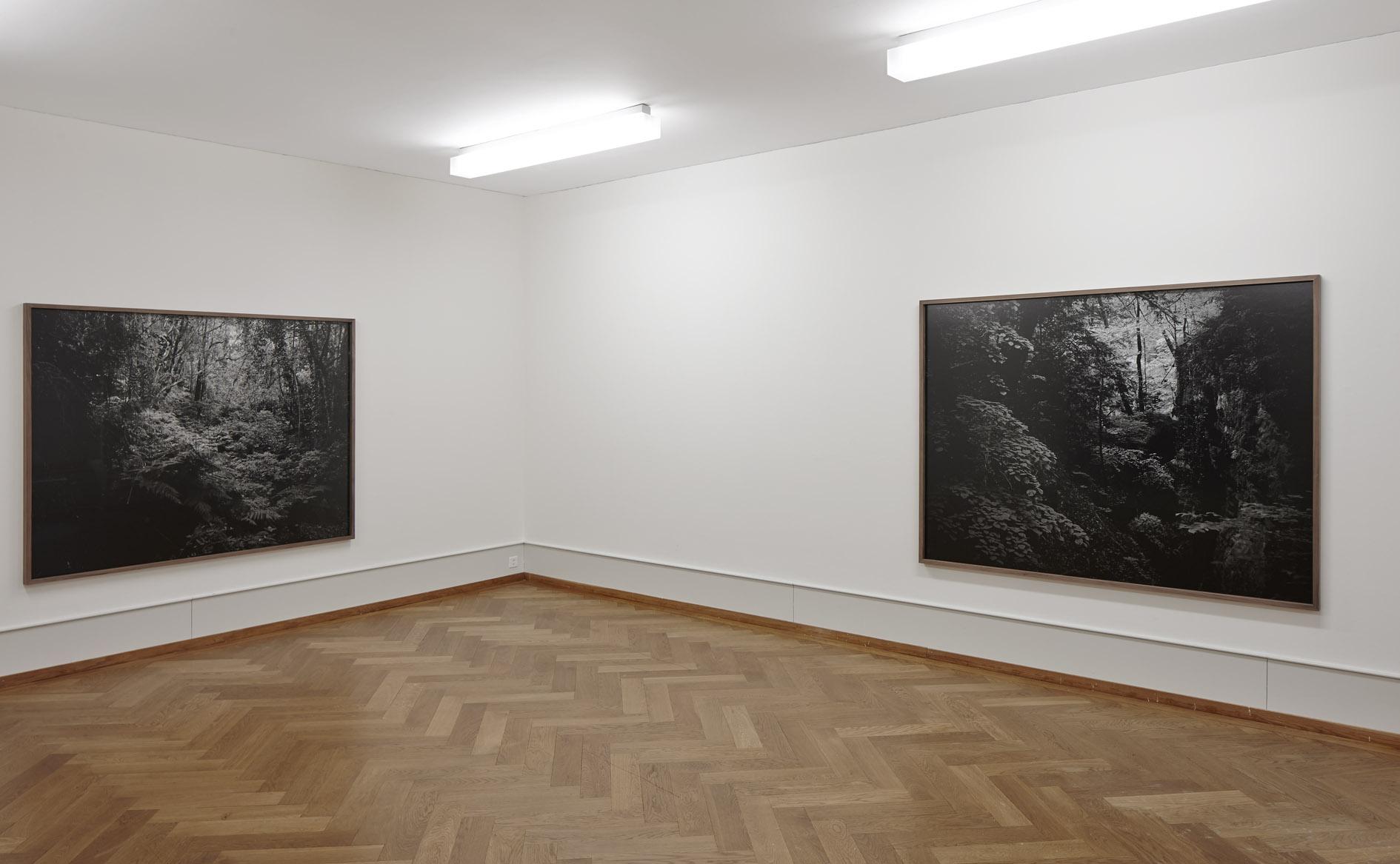 Lichtungen (Ausstellungsansicht)