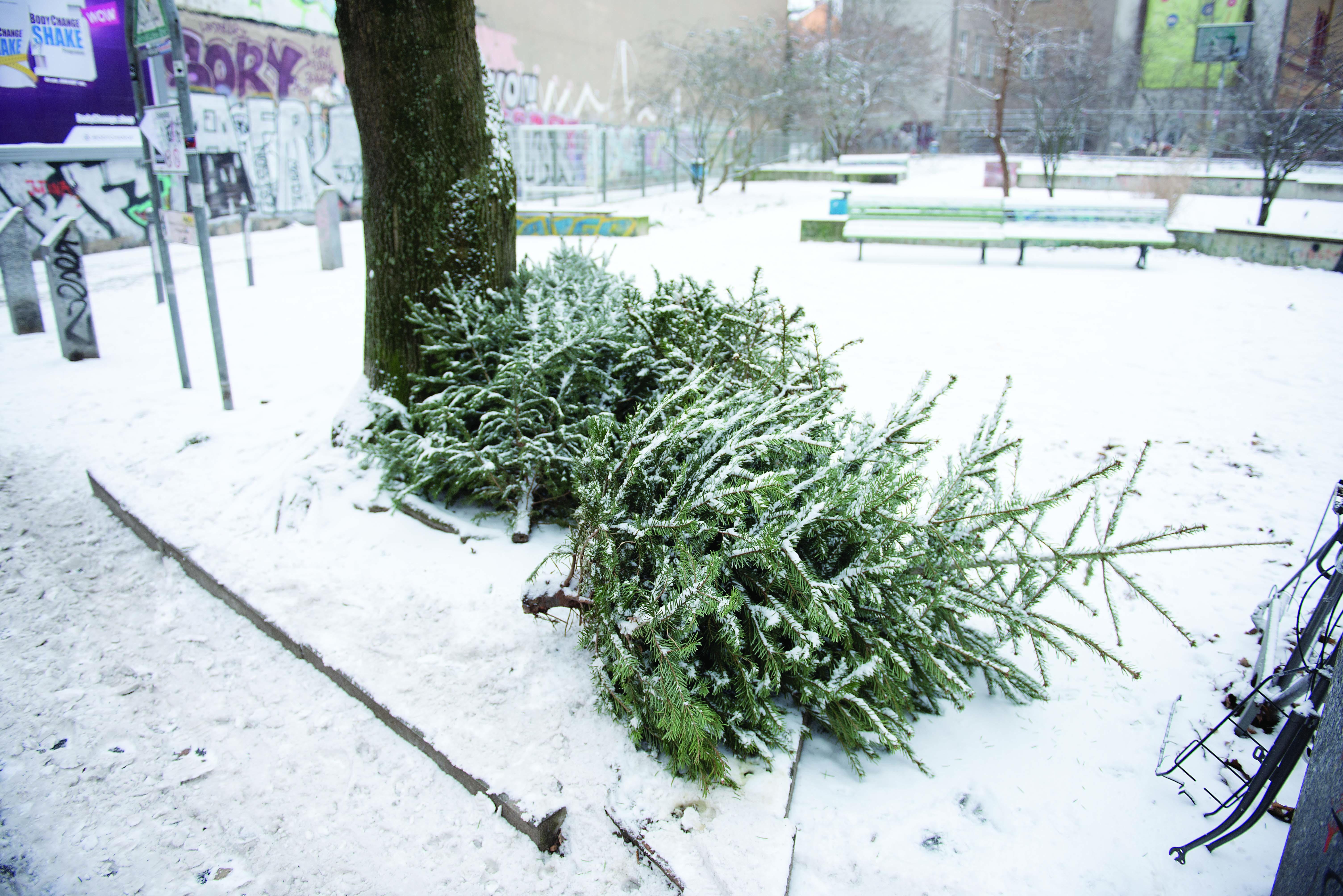 Snow & Christmas Tree/Happy New Year