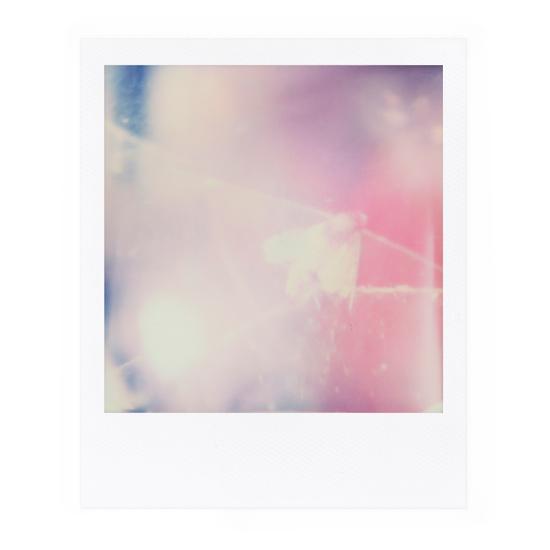 Polaroid Nr. 45, August 2018