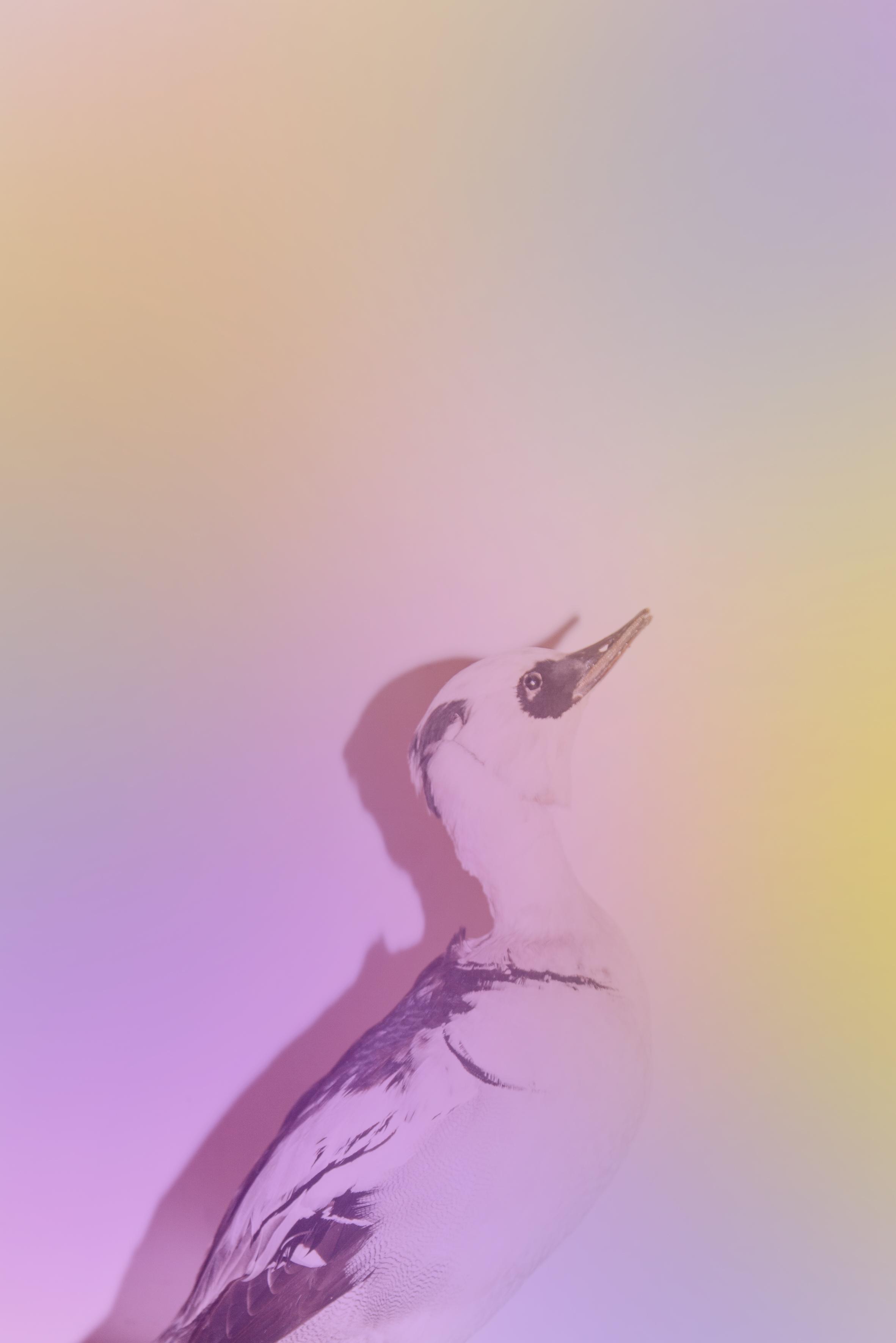 Stilllife Bird