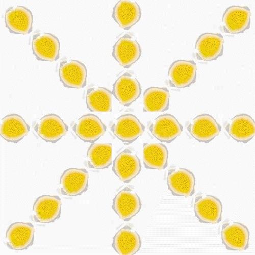 Salon solaire
