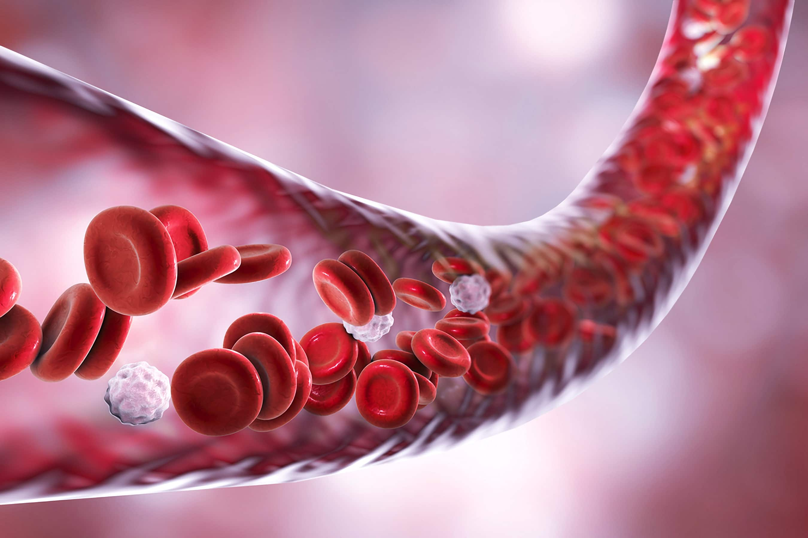 Understanding Albumin and Its Relationship to Aging and Cell Health