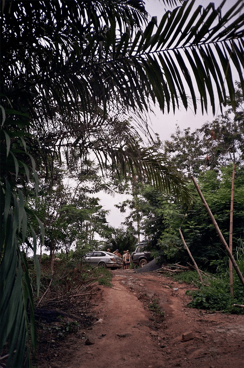 jungle in ghana