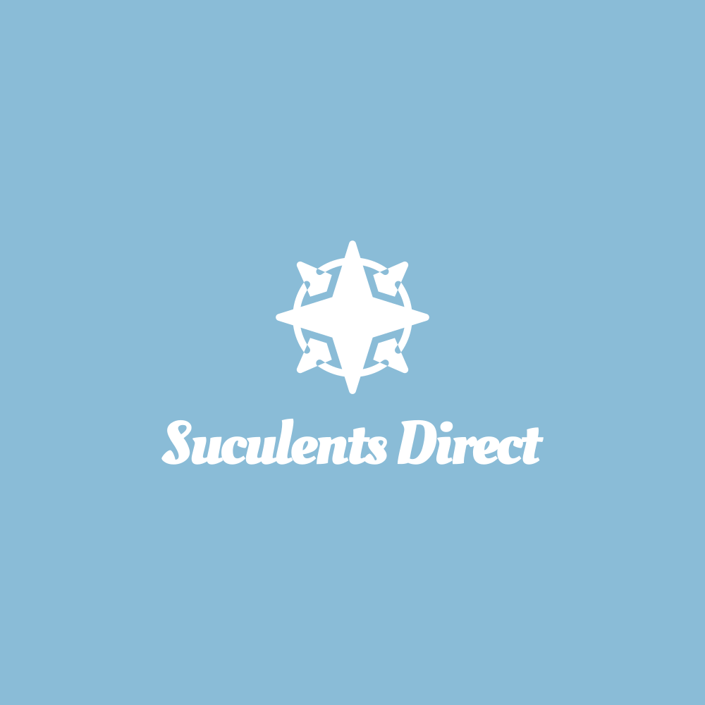 Suculents Direct