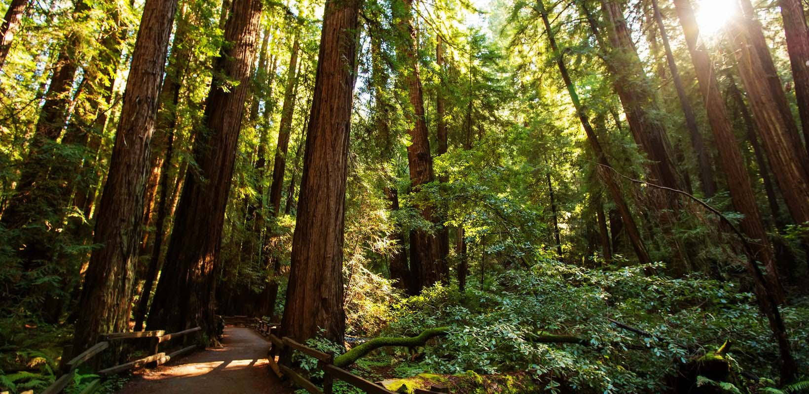 Muir Woods with 24-hour hop-on hop-off bus tour