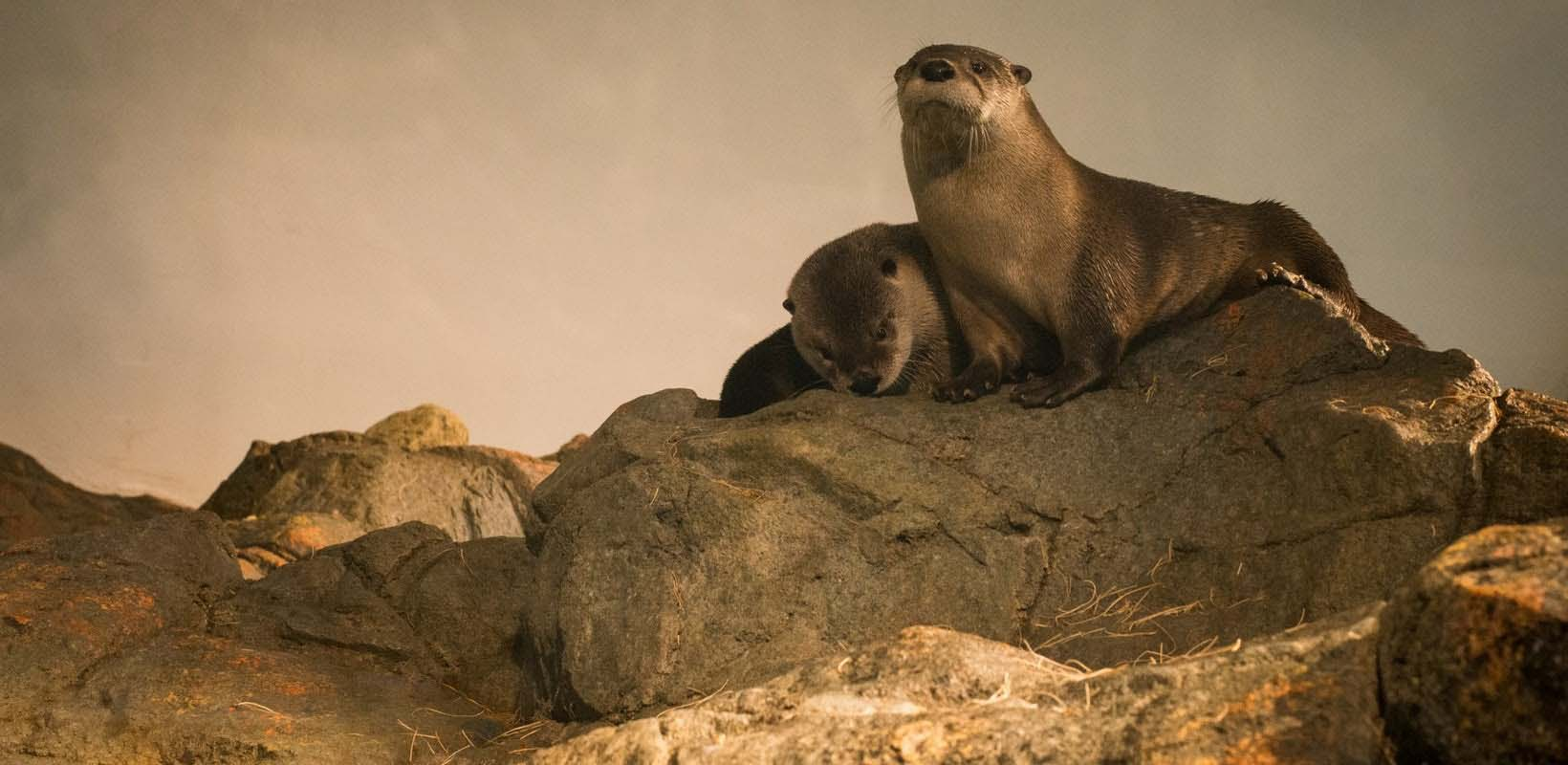 San Francisco Aquarium of the Bay Tickets