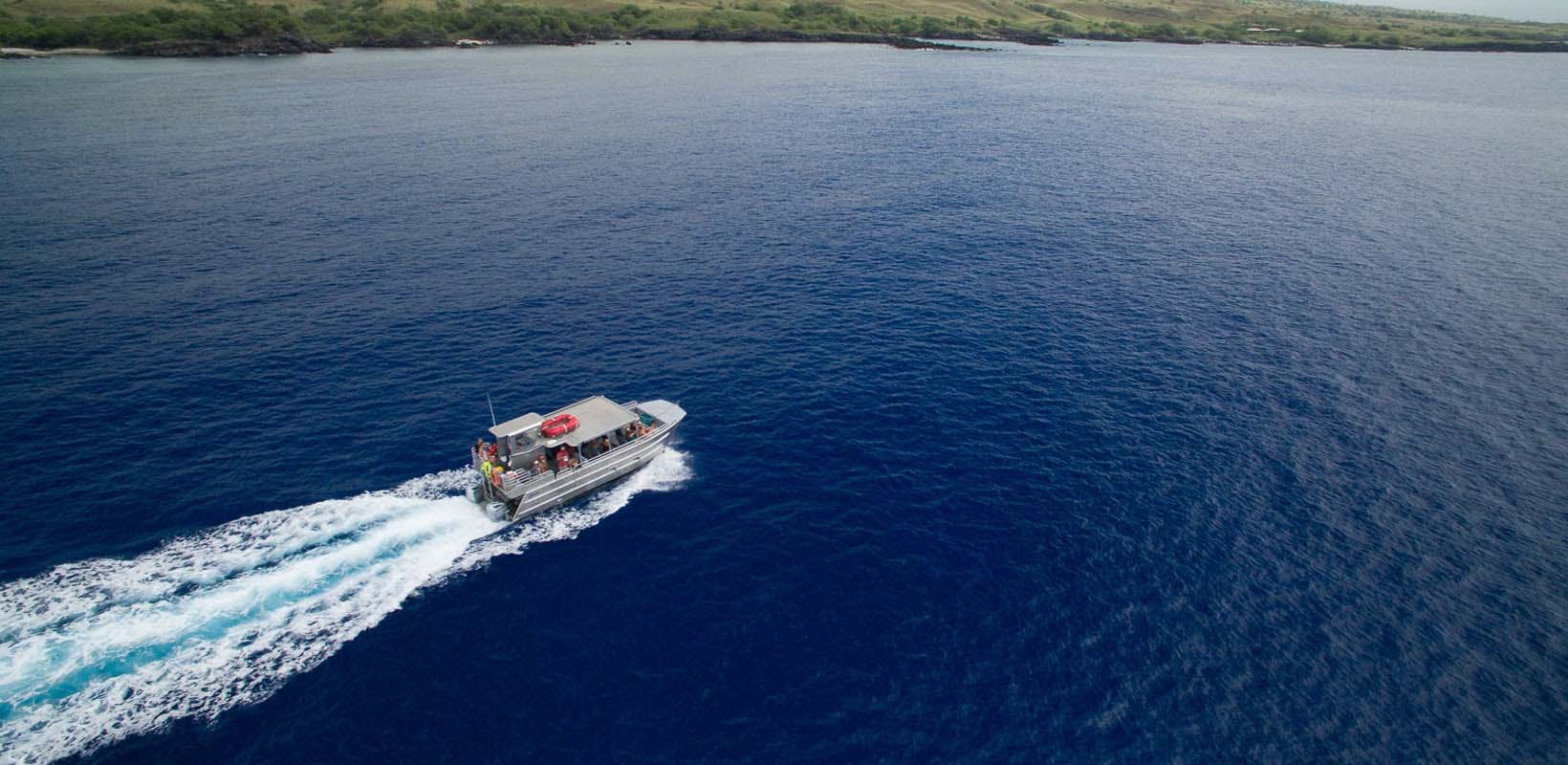 Catamaran cruise with dolphin watching, snorkeling and lunch