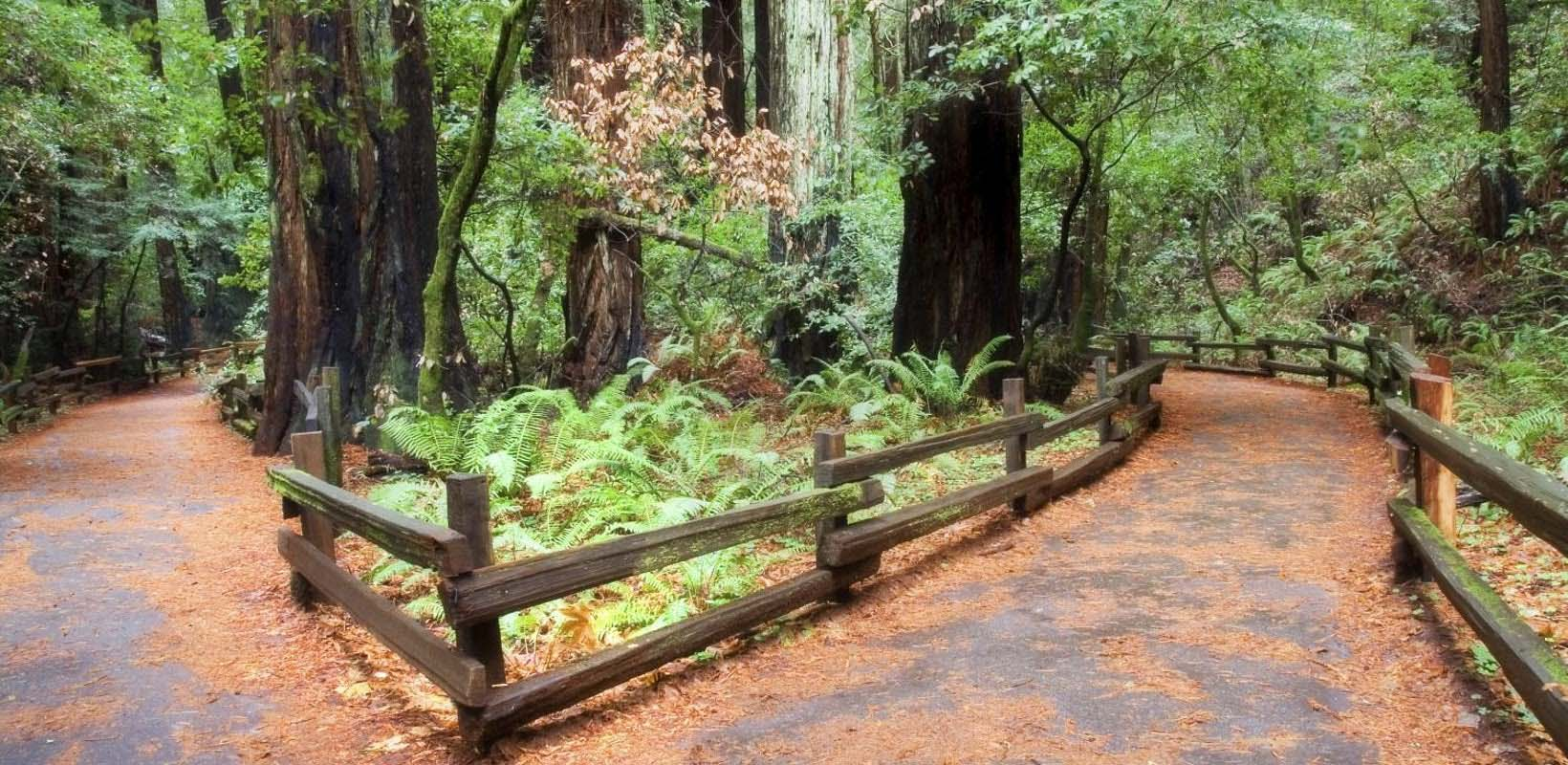 Muir Woods Guided Tour with Transportation and Bay Cruise