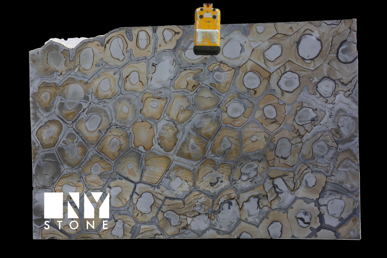 WARHOL SHELLS Granite