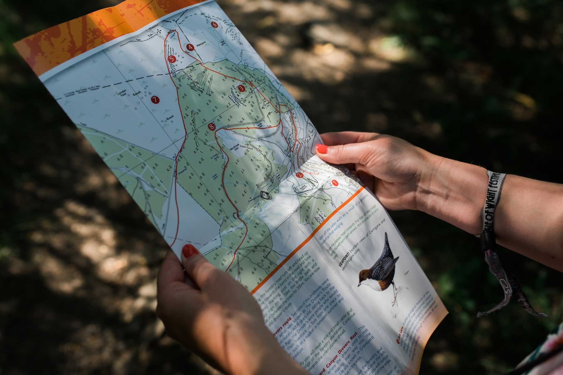 A person holding a walking map in the shaded woodland