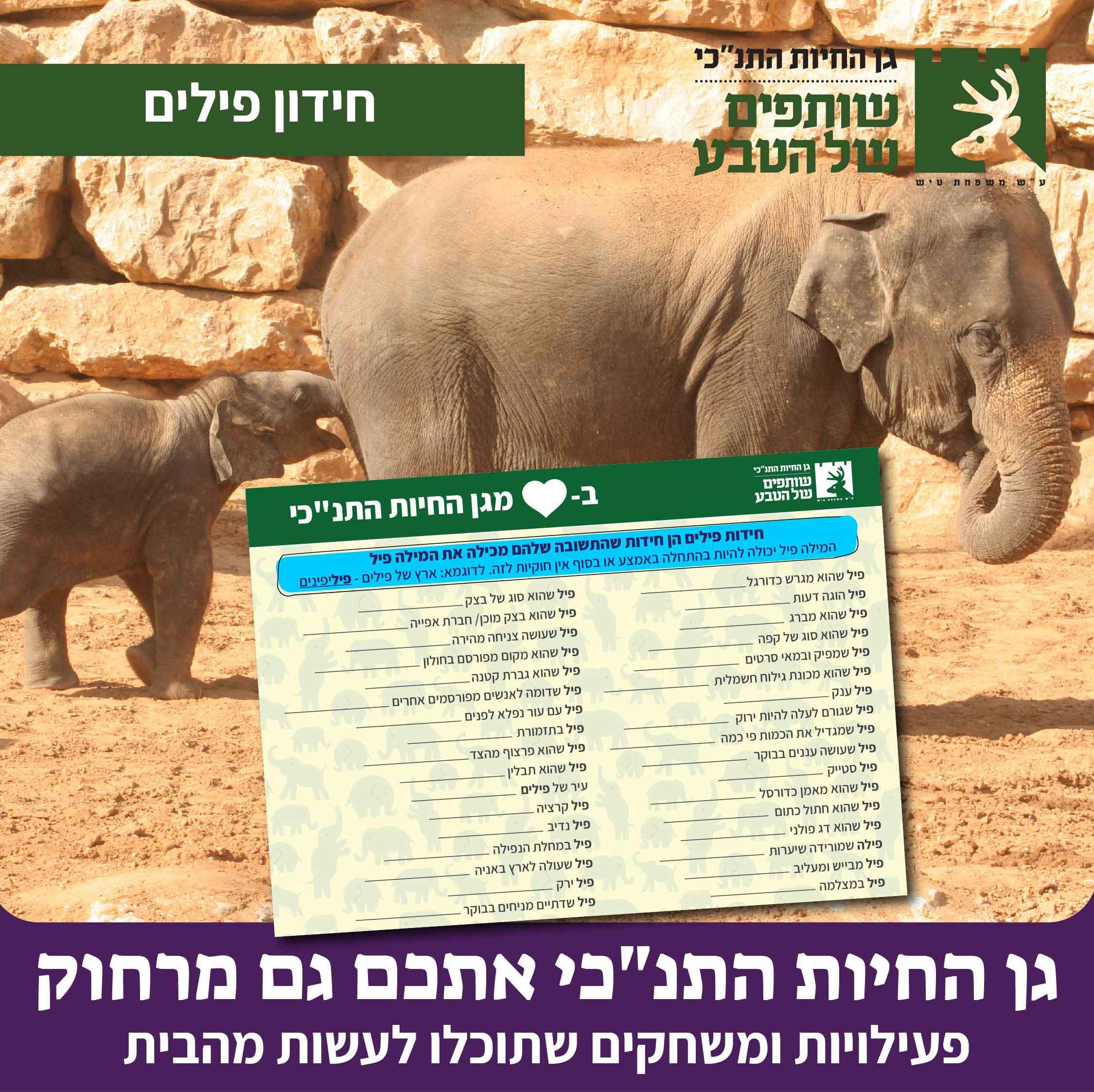 חידון פילים