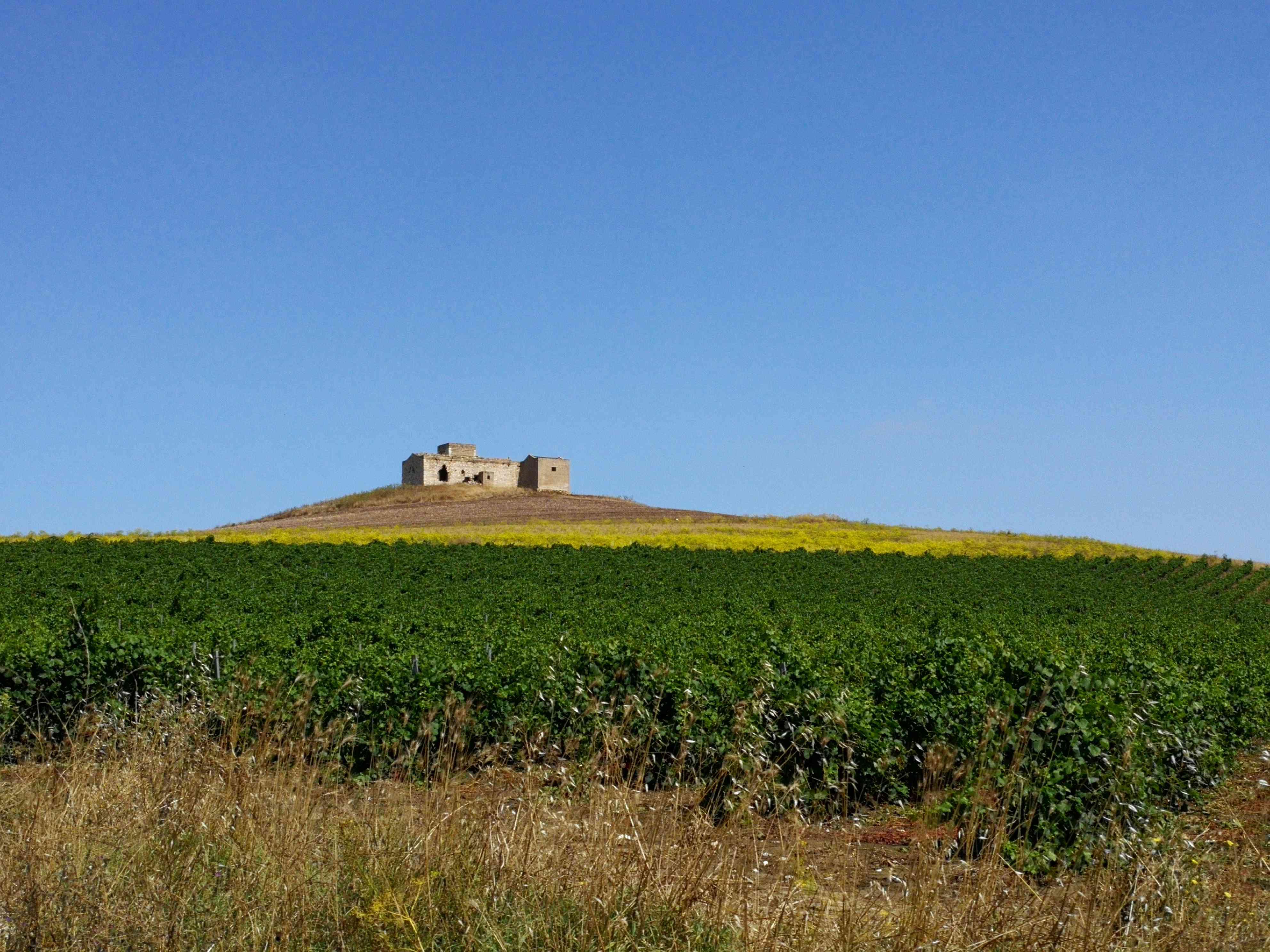 Campi con una casa di pietra sullo sfondo