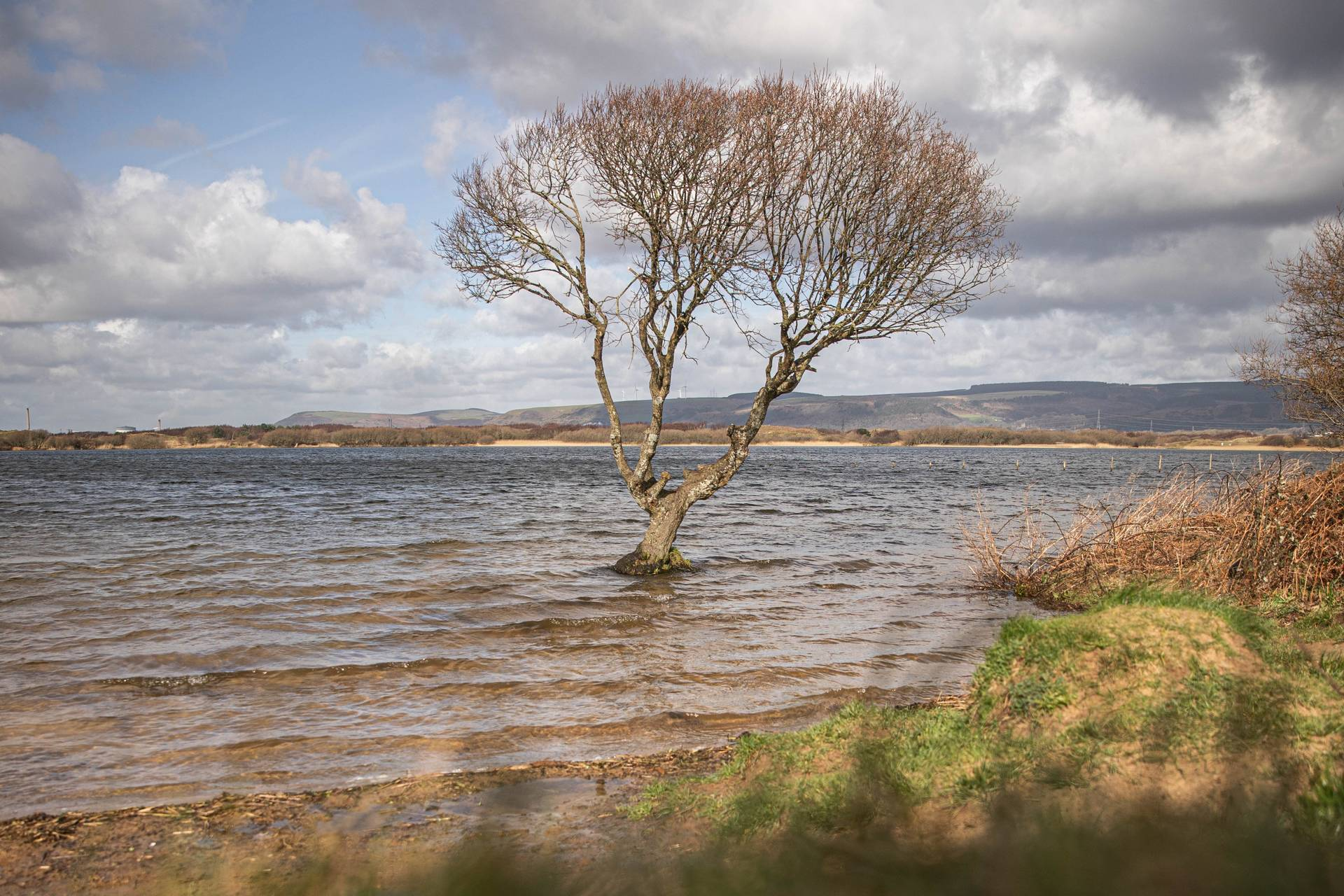 Tree in Kenfig Pool
