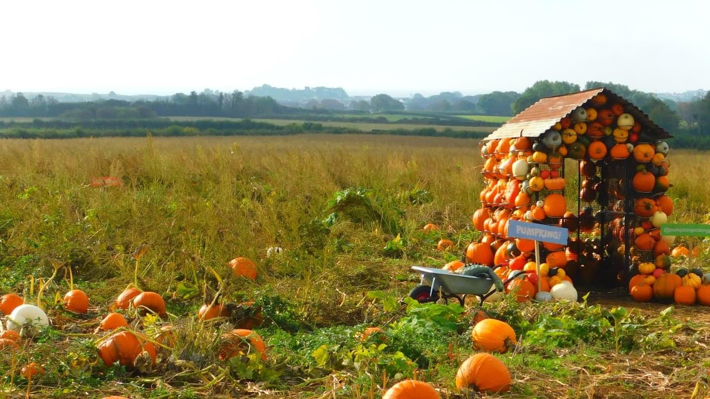 Porthcawl Pumpkin Picking Patch