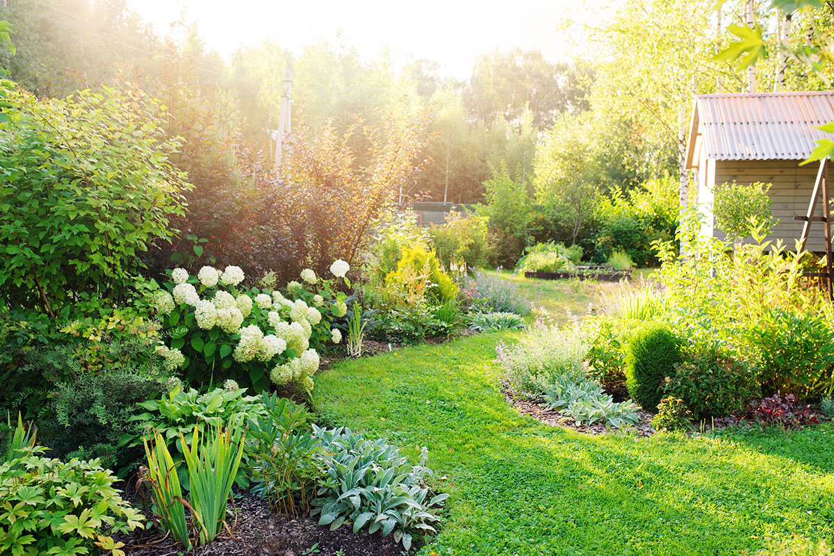 Image of a garden in summer