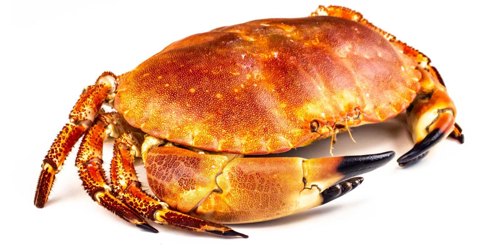 Salcombe Crab-shop online now