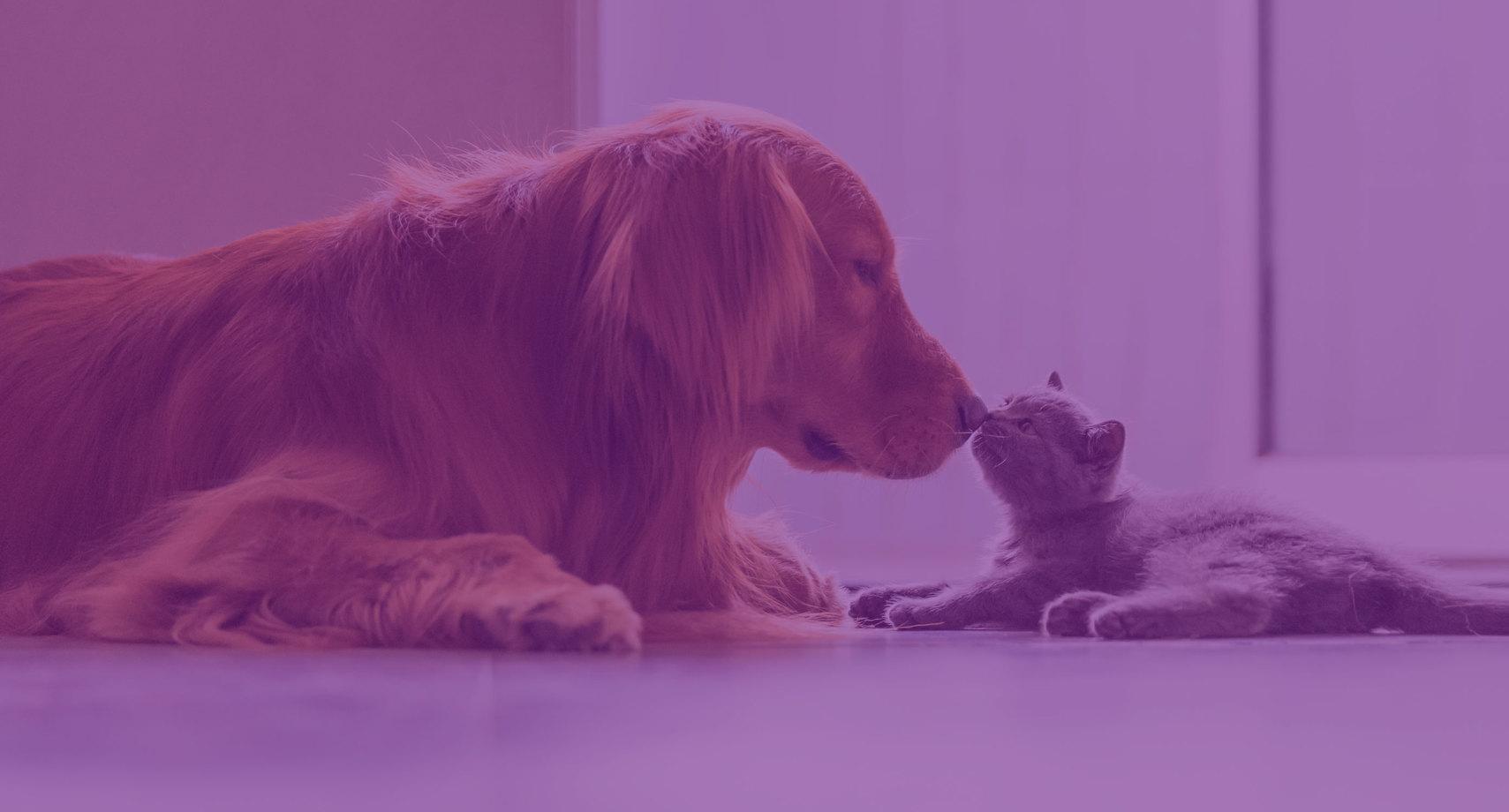 Vivo Valoriza Pets