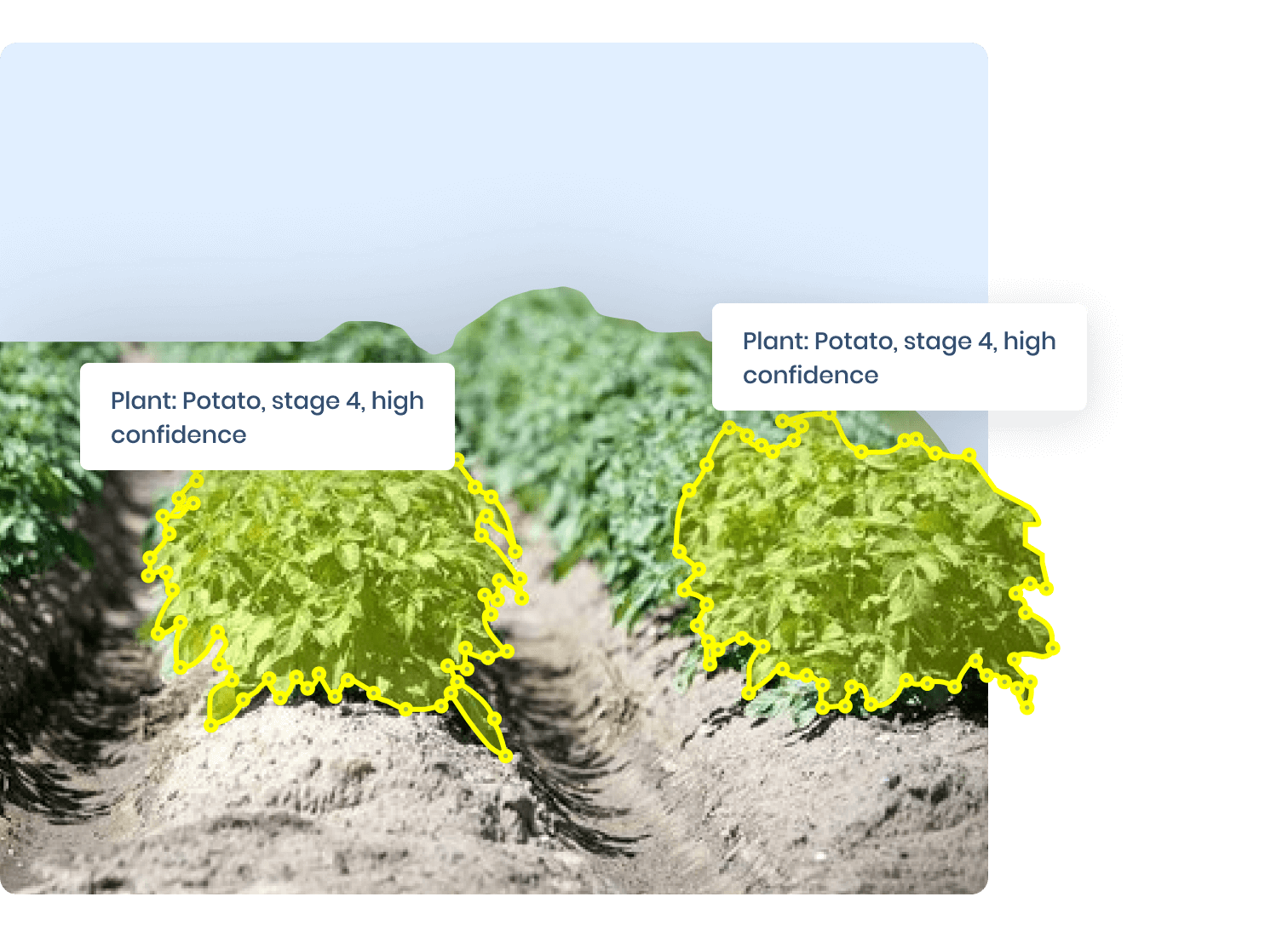 Image Annotation Agriculture